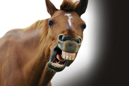 horse-test_2.jpg