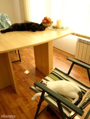 Котк и Мак мързелуват