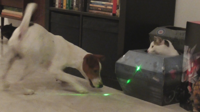Cats-and-Dogs-and-Lasers...-and-Tanks